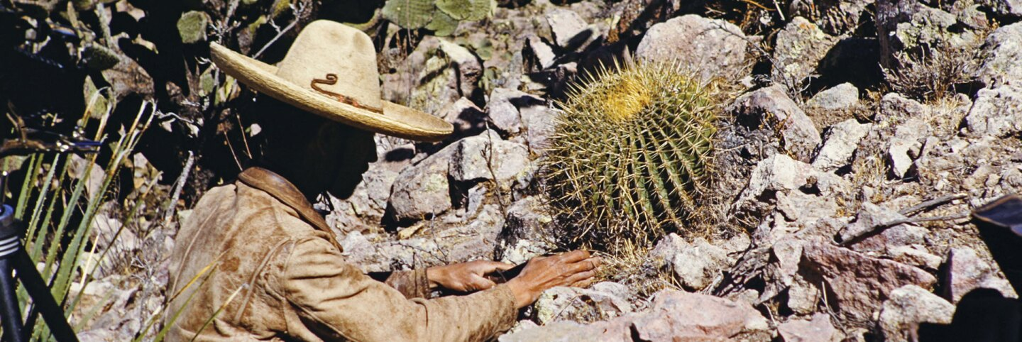 """Cactus explorer featured in """"Xerophile: Cactus Photographs from Expeditions of the Obsessed;"""" Date and location unknown."""