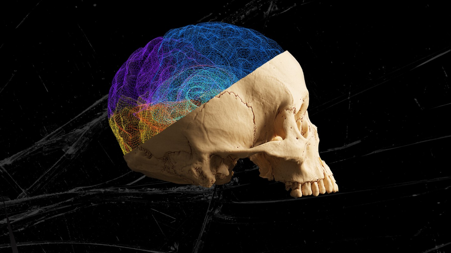 A skull with multi-colored mapping.