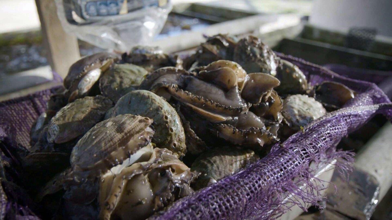 Abalone basket