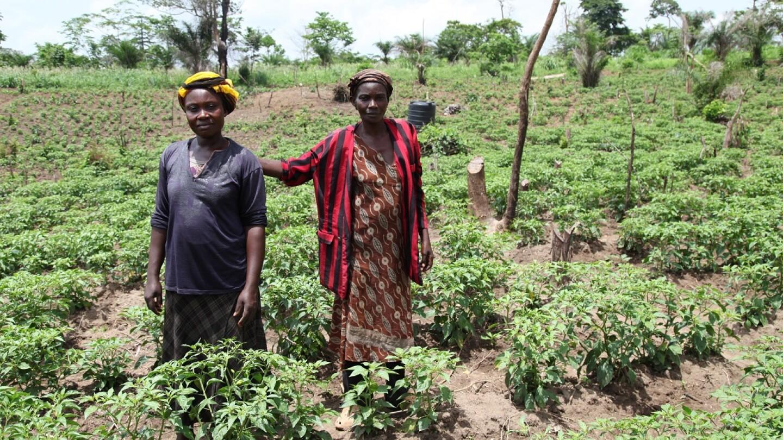 Women In Their Organic Chilli Farm near Techiman, Ghana