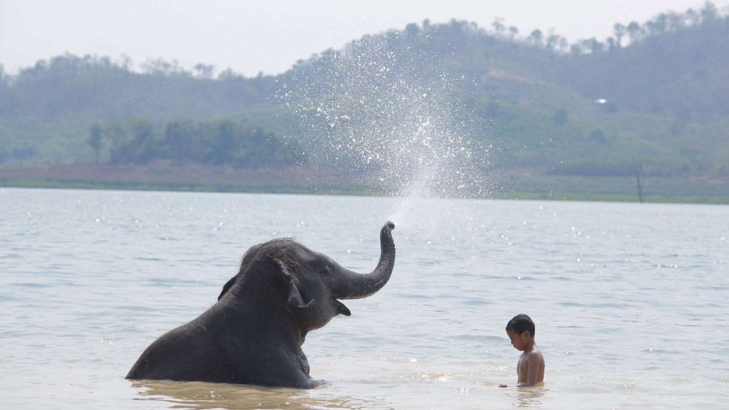 "An elephant sitting in a body of water sprays water out its trunk with a boy next to it. | From ""Pop Aye"""