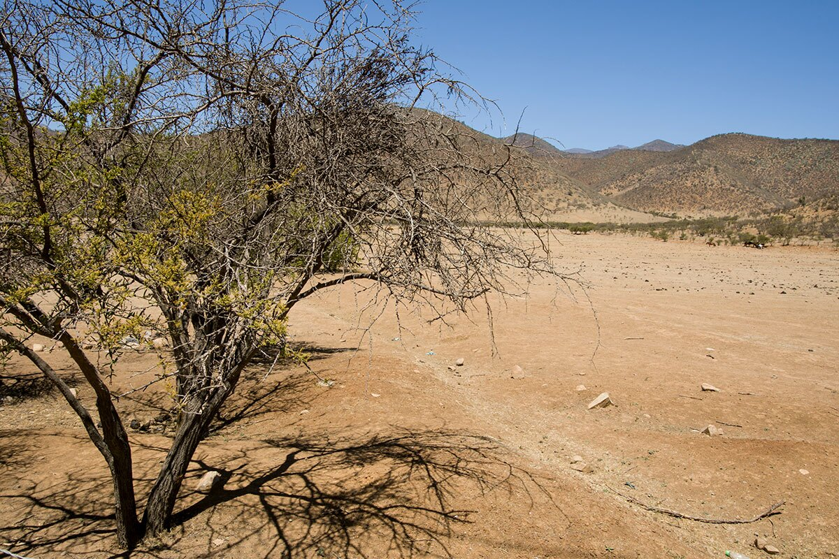 A dry tree and barren land in the Petorca Valley region of Chile.  | Valeria Cardi/Thomson Reuters Foundation