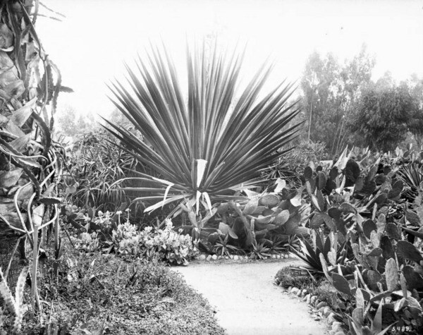 Eastlake Park offered visitors a cactus garden. Courtesy of the California Historical Society Collection, Title Insurance and Trust, and C.C. Pierce Photography Collection, USC Libraries.