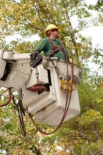 tree-triming-los-angeles-budget