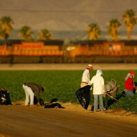 Farmworkers in Coachella Valley near Mecca