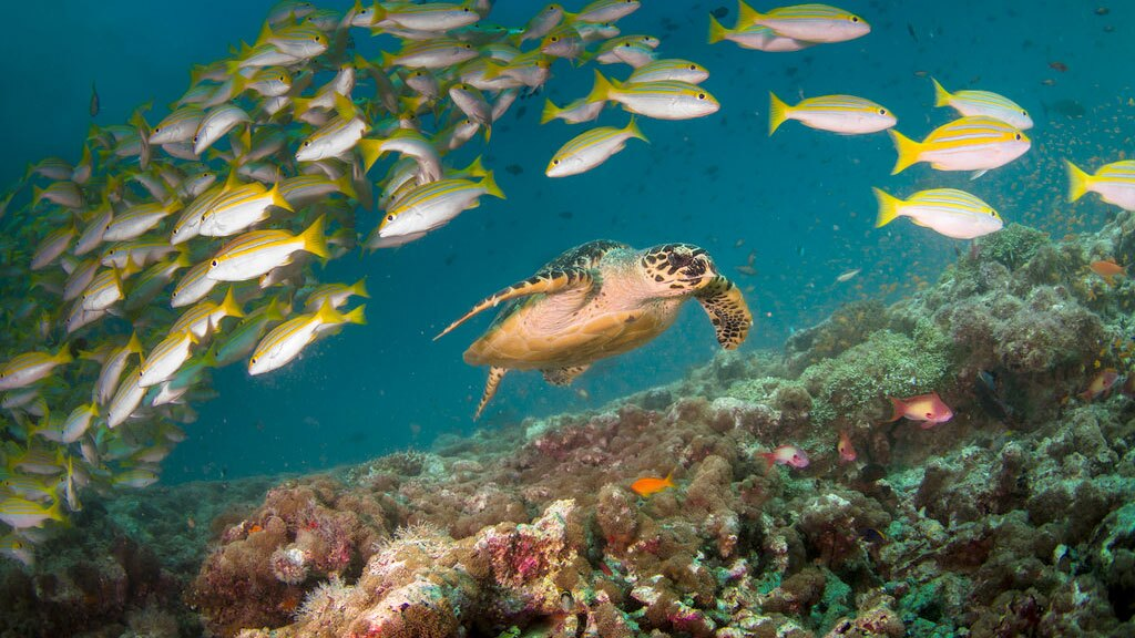 Sea turtle and fish at a coral reef in the Maldives | Photo: Tchami, some rights reserved