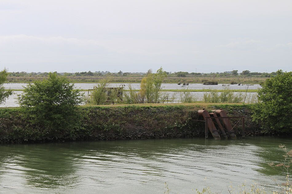 Flooded Land Poking from Delta Waters