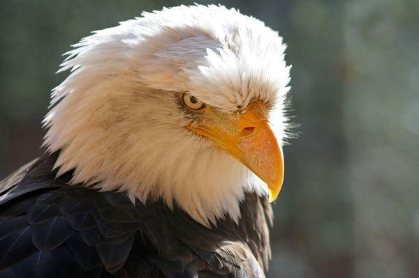 eagle-1-1-16-thumb-630x418-100453