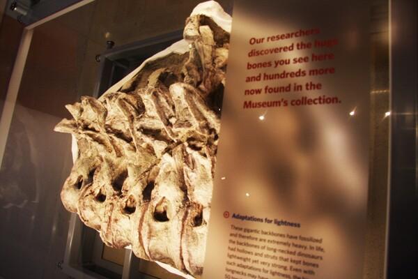bonesdetail_600
