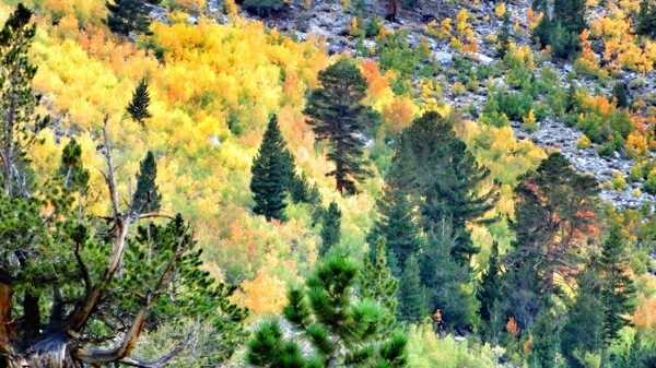 Fall color seen from near the Tyee Lakes trailhead. | Photo: Zach Behrens/KCET