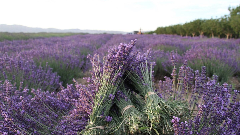 Courtesy Keys Creek Lavender Farm