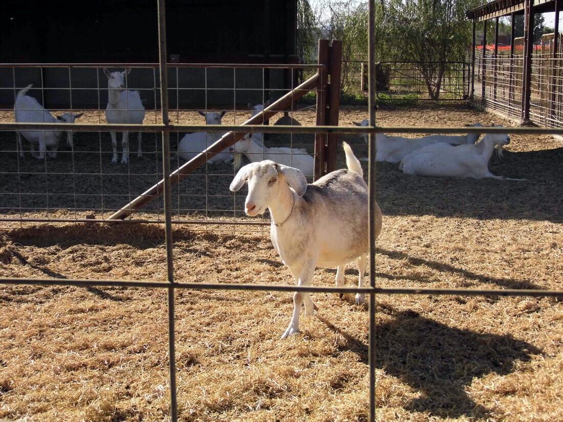 Drake Family Farms (2)