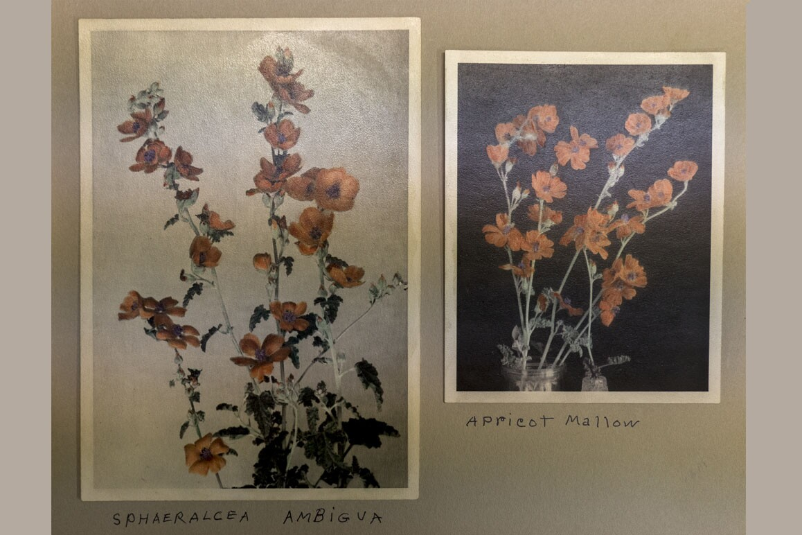Botanist Mary Beal's hand-colored photographs