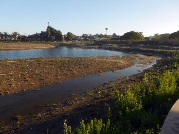 CC_Wetlands1
