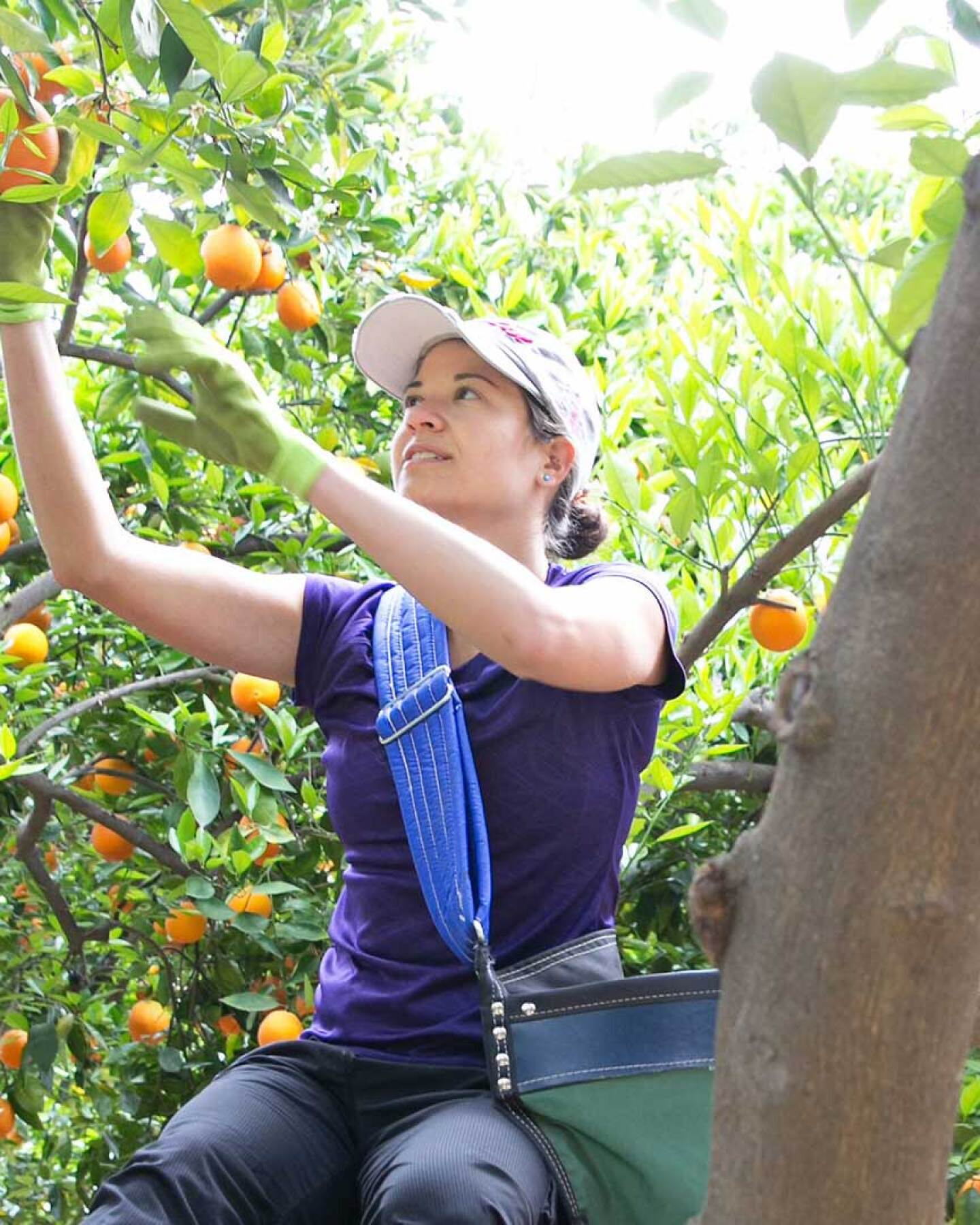 Rather than let the fruit from orange and lemon trees go to waste, the non-profit Food Forward formed in 2009 to gather fruit from trees throughout the region and donates fruit to local food banks. 2014. | Courtesy of Angel City Press