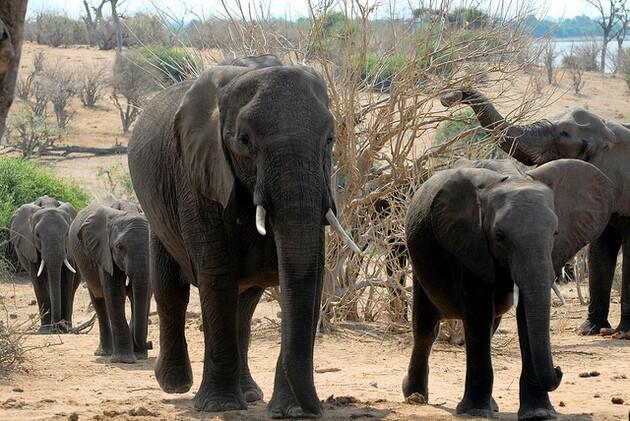 ivory-ban-bill-3-11-15-thumb-630x421-89319