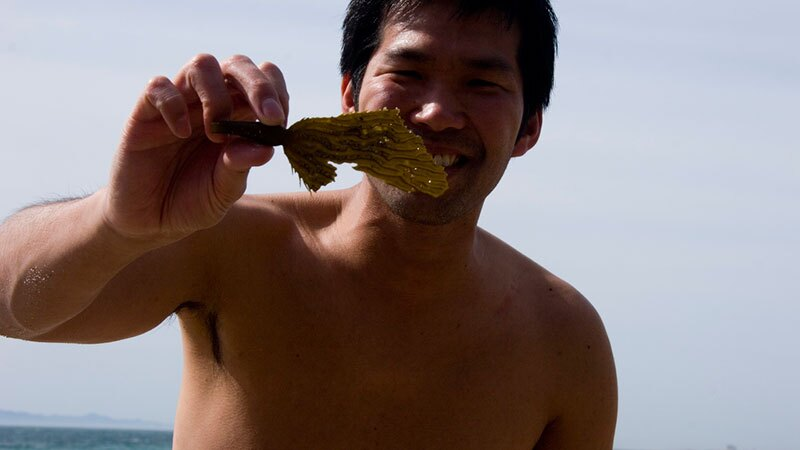 Man on beach admiring kelp