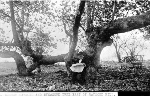 A sycamore tree in South Pasadena in 1886. Courtesy of the USC Libraries - California Historical Society Collection.