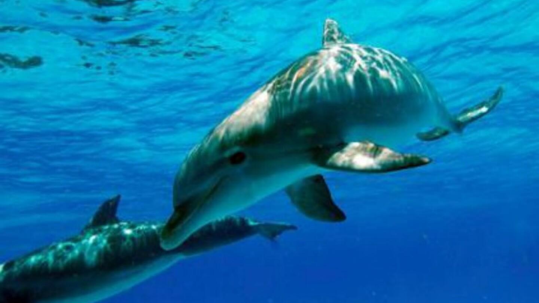 exploredolphins-630