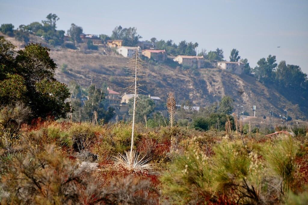 Tajunga Wash Landscape.jpg