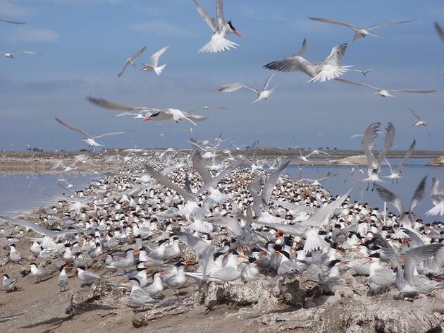 san-diego-bay-national-wildlife-refuge-thumb-630x472-92376