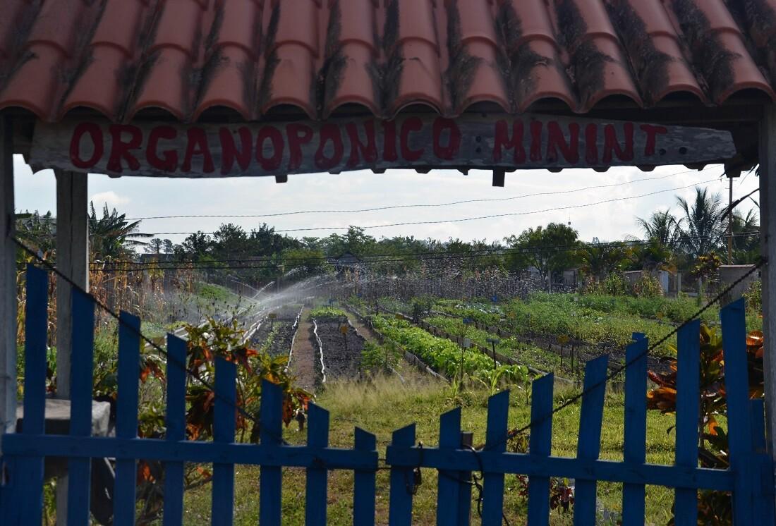 Organoponico garden in Viñales, Cuba