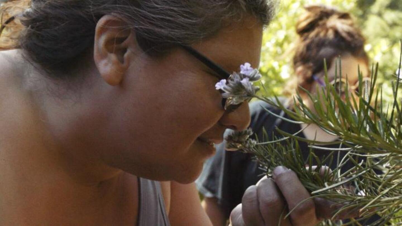 Inspecting Plants