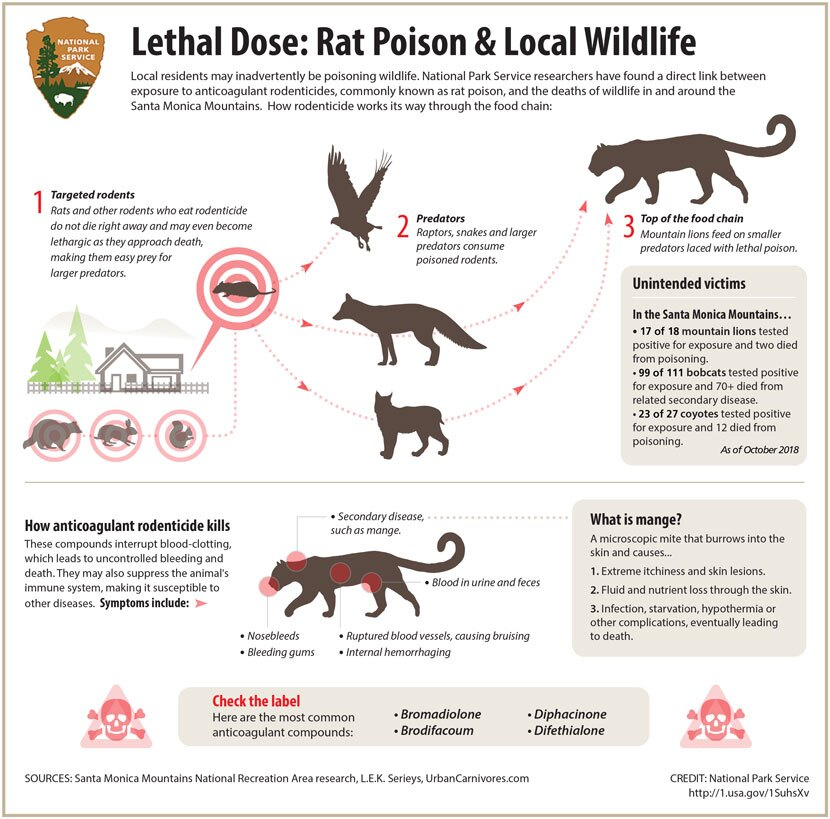 Infographic on the impact of rat poison on local wildlife.   National Park Service