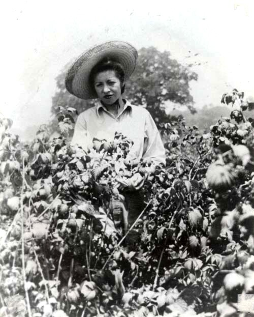 A woman picks berries, date unknown. | Courtesy of La Historia Society of El Monte