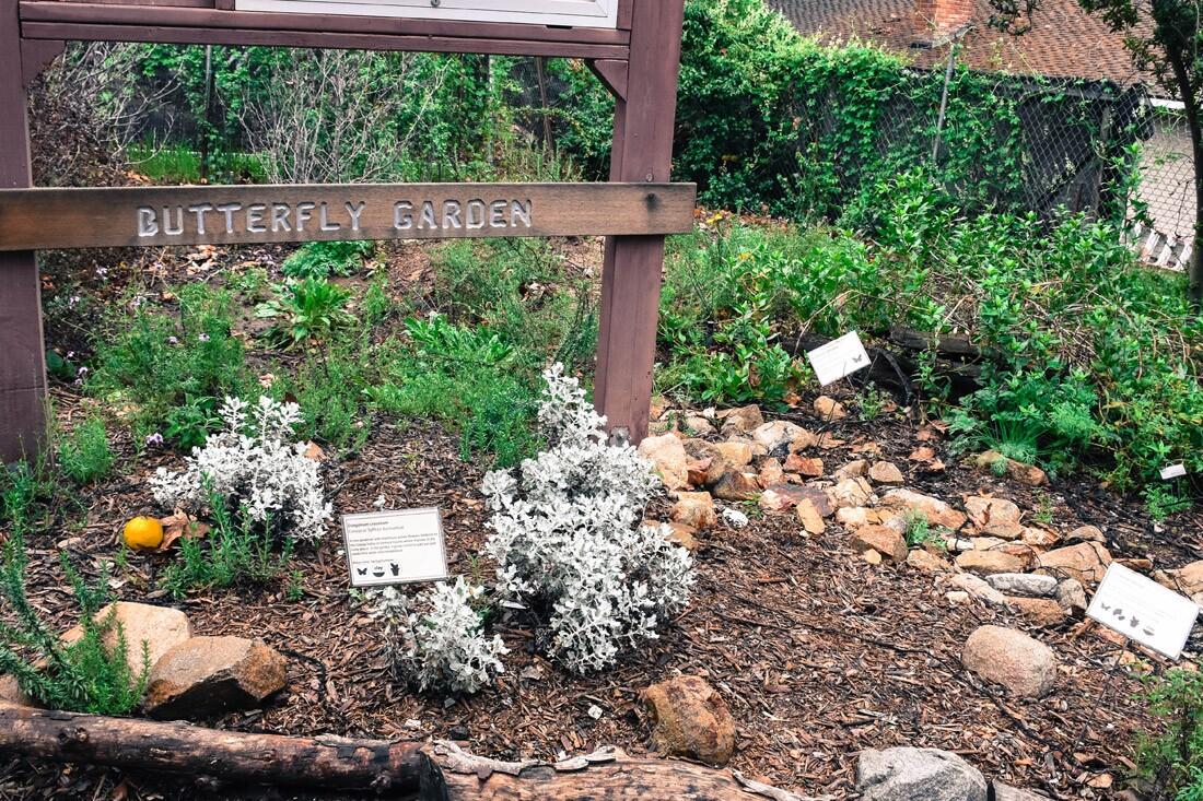 Butterfly Garden, Theodore Payne