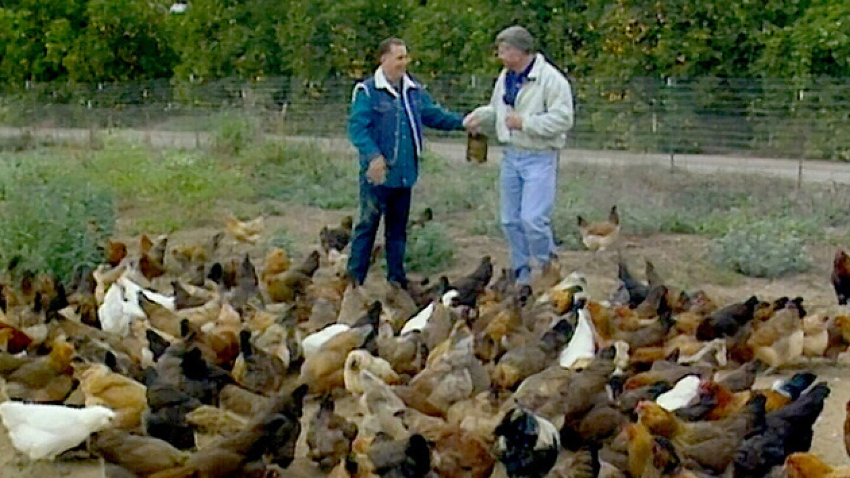 happychickens_630.jpg