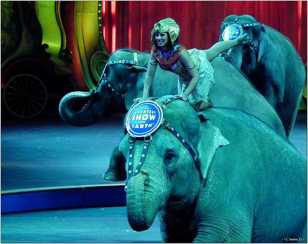 A Ringling Bros. show | Photo: Joms/Flickr/Creative Commons License