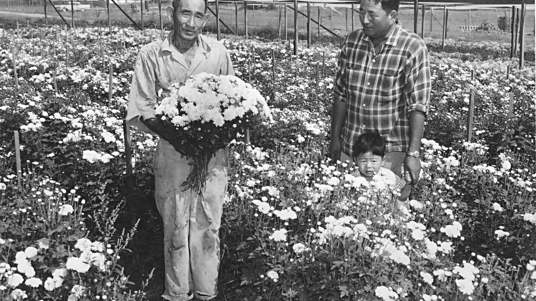 Descanso Gardens: Japanese Internment Camellias