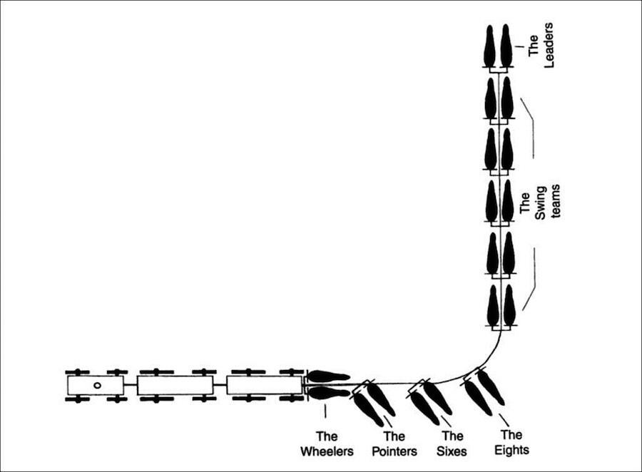 Twenty mule team diagram