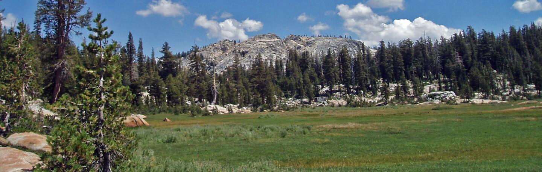 meadow-banner-1.jpg