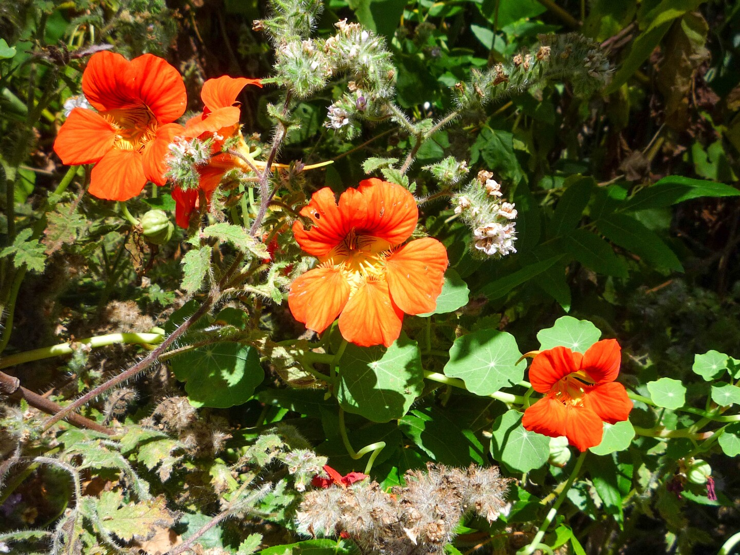 A close-up of red wldflowers found along the Solstice Canyon trail in the Santa Monica Mountains.