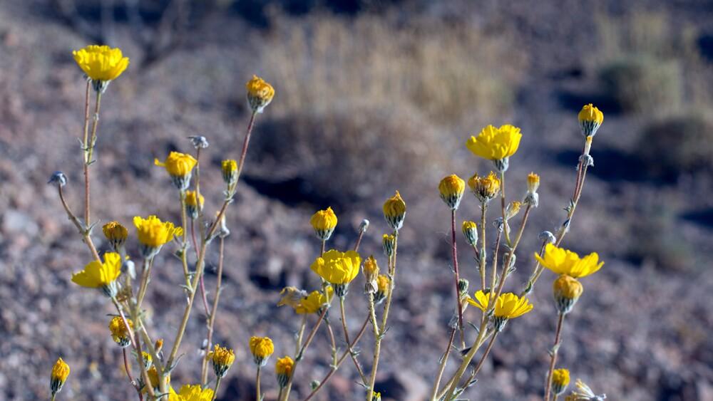 Wildflowers at Bonanza Spring | Photo: Chris Clarke