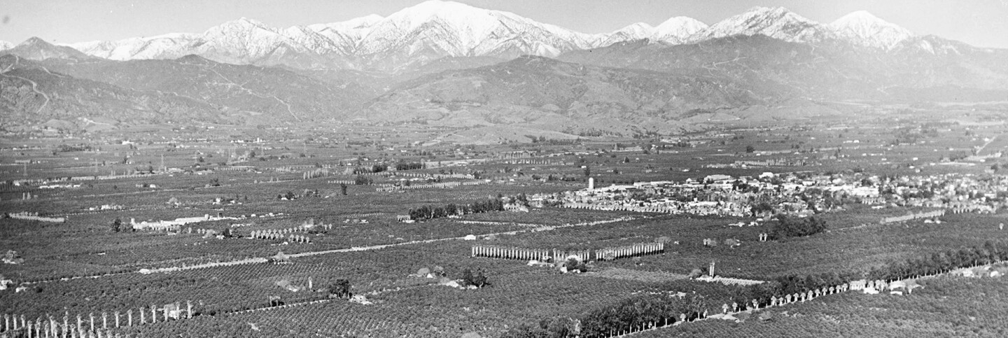 An aerial view of orange groves near Covina, 1941 | Courtesy of Angel City Press