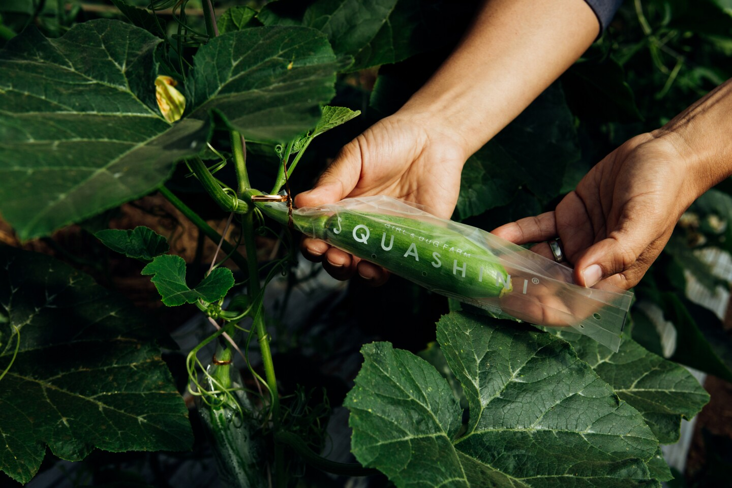 Aaron Choi presents a squash growing in the fields of Girl and Dug Farm.