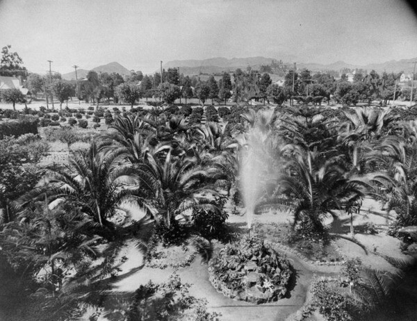 Palm trees on Jacob Stern's garden on the southwest corner of Hollywood and Vine. Courtesy of the Photo Collection - Los Angeles Public Library.