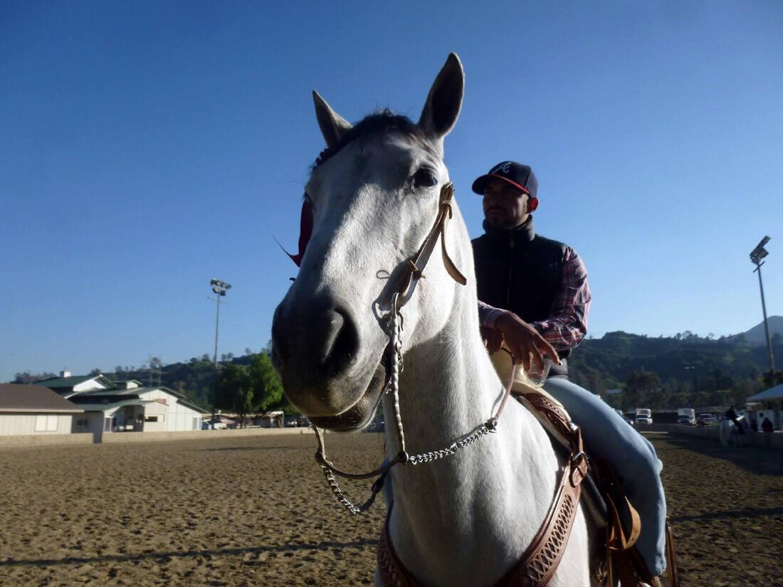 Equestfest (1)