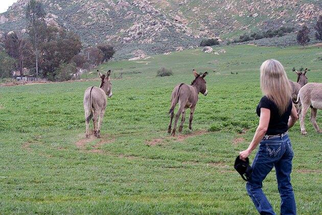 wendy-hazes-donkeys-1-30-15-thumb-630x420-87415