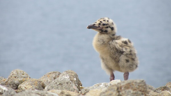 A chick stands at the edge of a cliff | Photo by Zach Behrens/KCET