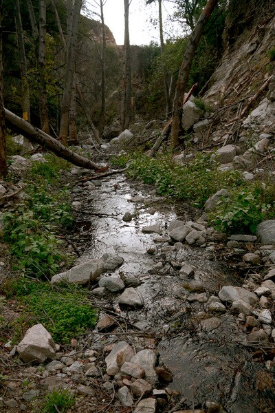 The natural beauty of the Arroyo Seco remains in the upper sections of the stream. Photo by Yosuke Kitazawa   KCET