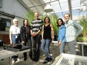 Millet Group
