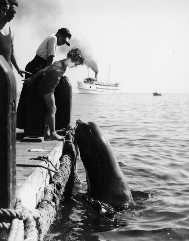 Sea lion feeding on Catalina