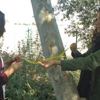 Durfee students measure the circumference of a tree as part of the data they are collecting to better understand how trees keep the ground cool | Photo: Amigos de los Rios Facebook