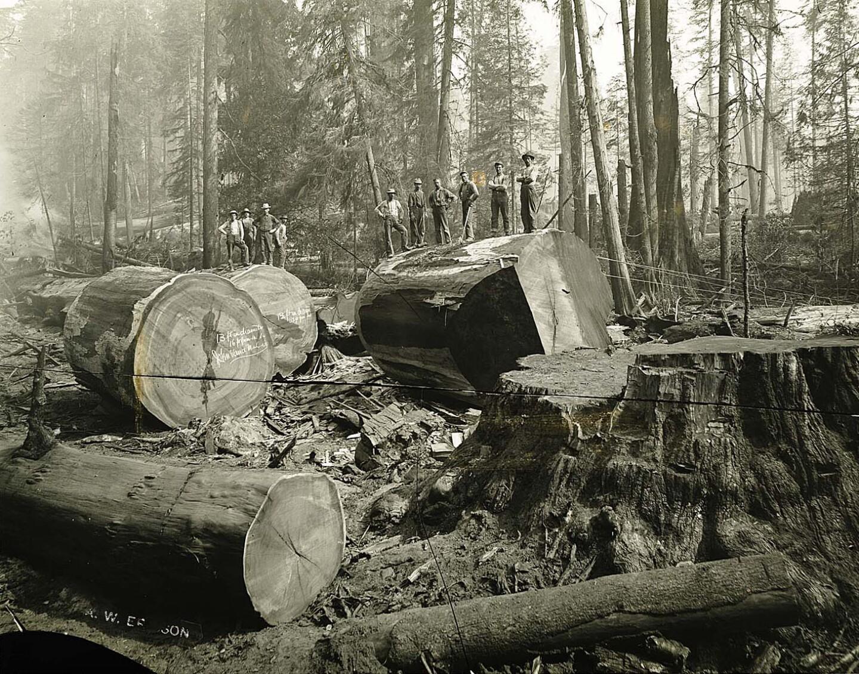 Men posing atop sections of redwood logs