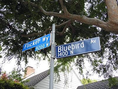 the bird streets