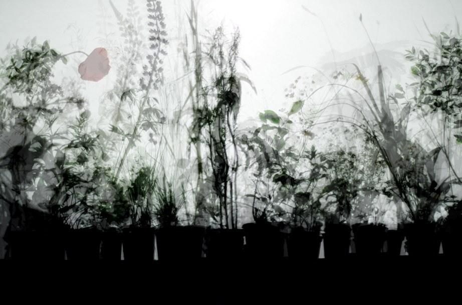 final_plant_shadow_for_slide_web.jpg